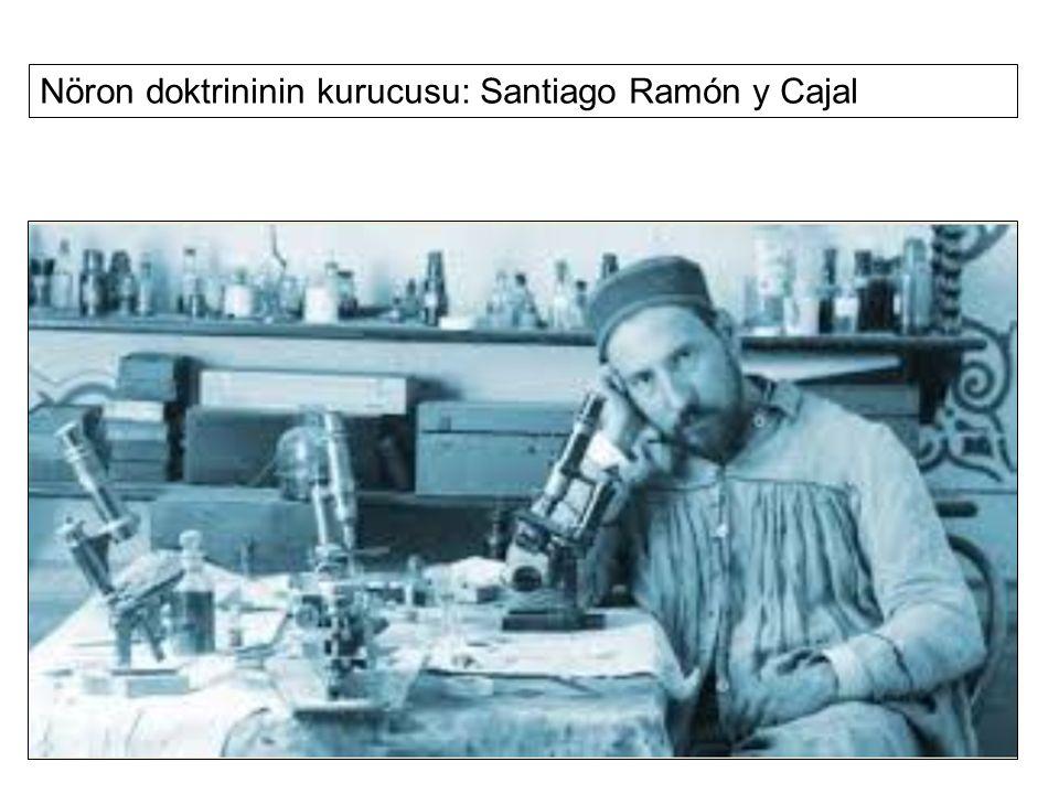 Nöron doktrininin kurucusu: Santiago Ramón y Cajal