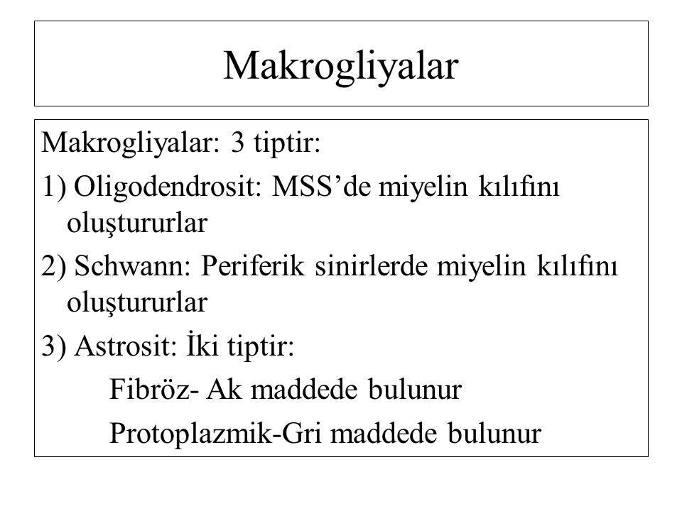 Makrogliyalar: 3 tiptir: 1) Oligodendrosit: MSS'de miyelin kılıfını oluştururlar 2) Schwann: Periferik sinirlerde miyelin kılıfını oluştururlar 3) Astrosit: İki tiptir: Fibröz- Ak maddede bulunur Protoplazmik-Gri maddede bulunur Makrogliyalar