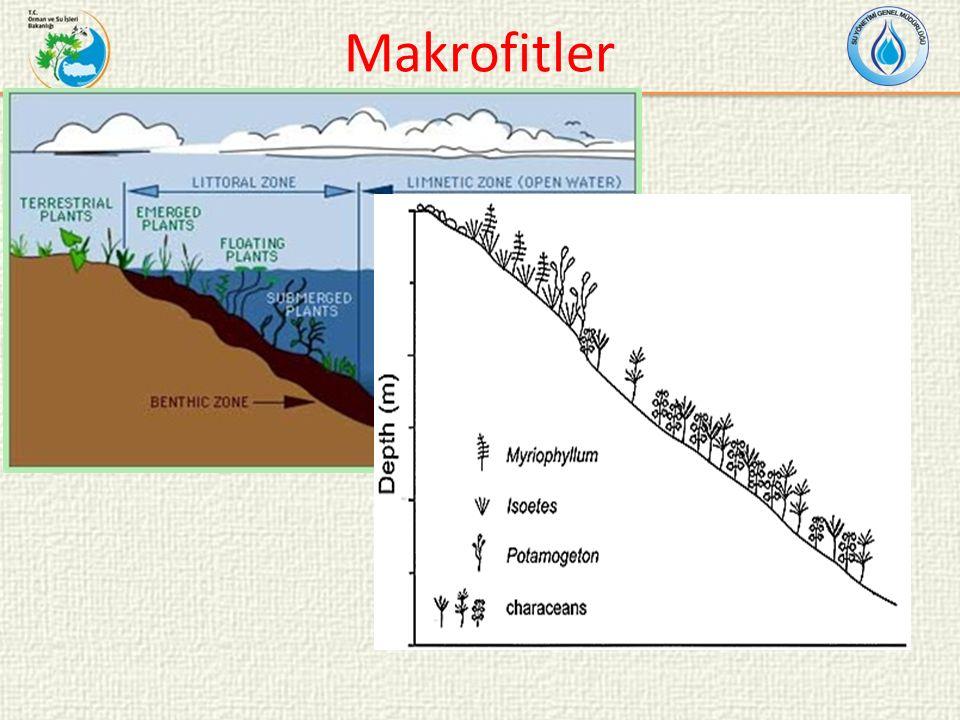 Makrofitler