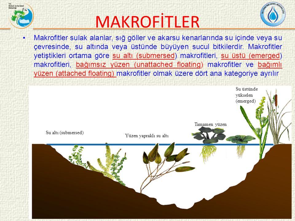 Makrofitler sulak alanlar, sığ göller ve akarsu kenarlarında su içinde veya su çevresinde, su altında veya üstünde büyüyen sucul bitkilerdir.
