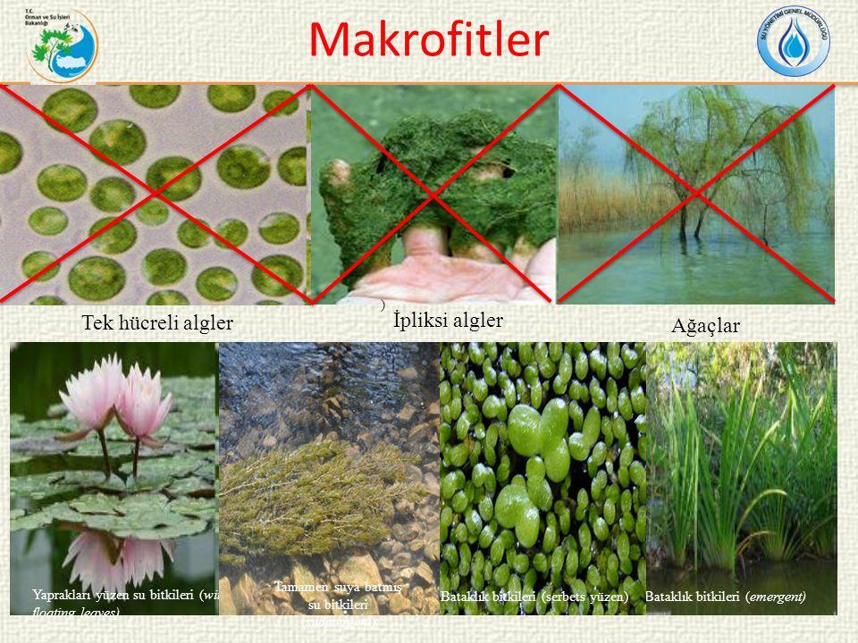 Makrofitler Tek hücreli algler İpliksi algler Ağaçlar ) Yaprakları yüzen su bitkileri (with floating leaves) Bataklık bitkileri (emergent) Tamamen suya batmış su bitkileri (submergent) Bataklık bitkileri (serbets yüzen)
