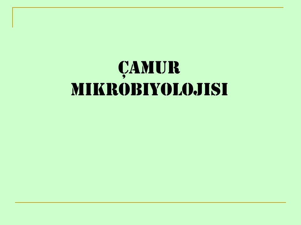 Çamur Mikrobiyolojisi