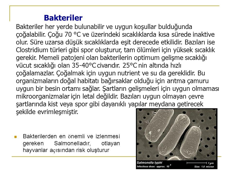 Bakteriler Bakteriler her yerde bulunabilir ve uygun koşullar bulduğunda çoğalabilir. Çoğu 70 °C ve üzerindeki sıcaklıklarda kısa sürede inaktive olur