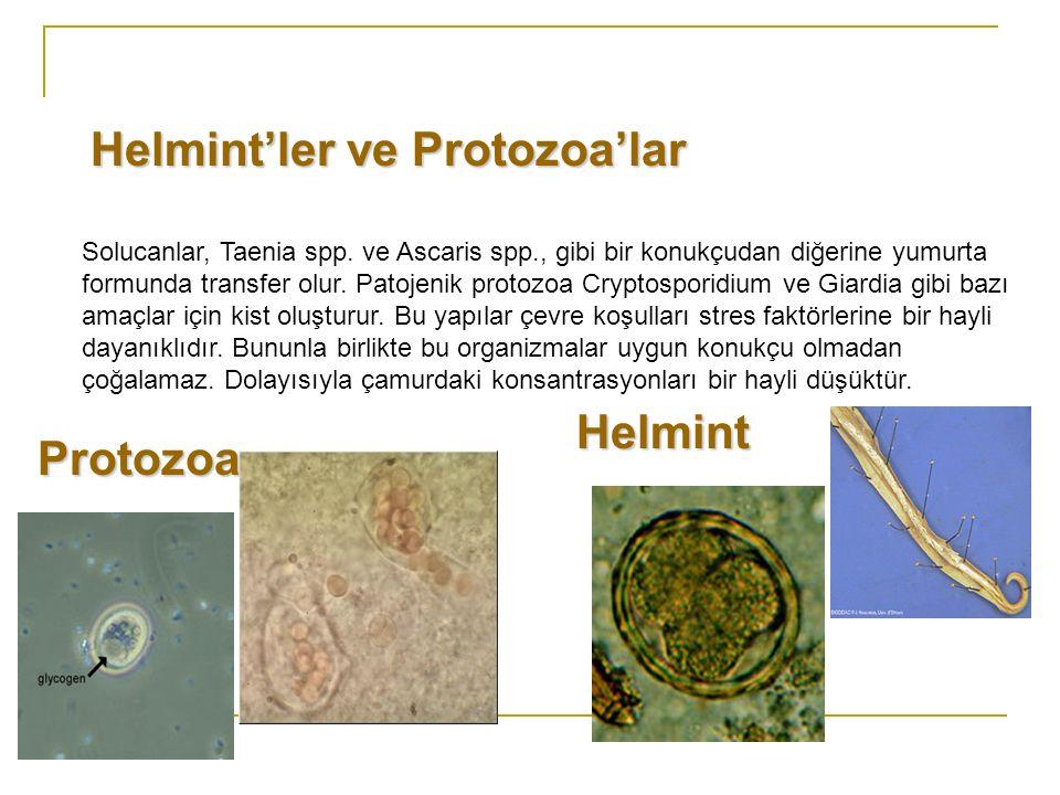 Solucanlar, Taenia spp. ve Ascaris spp., gibi bir konukçudan diğerine yumurta formunda transfer olur. Patojenik protozoa Cryptosporidium ve Giardia gi