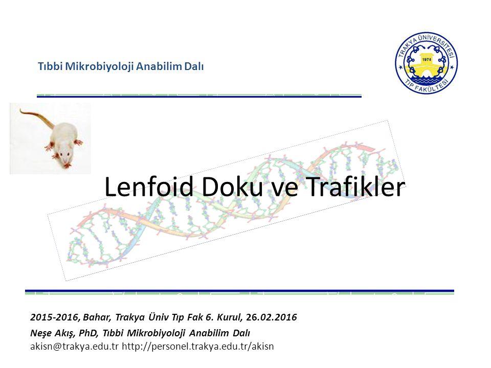 Tıbbi Mikrobiyoloji Anabilim Dalı Lenfoid Doku ve Trafikler 2015-2016, Bahar, Trakya Üniv Tıp Fak 6. Kurul, 26.02.2016 Neşe Akış, PhD, Tıbbi Mikrobiyo