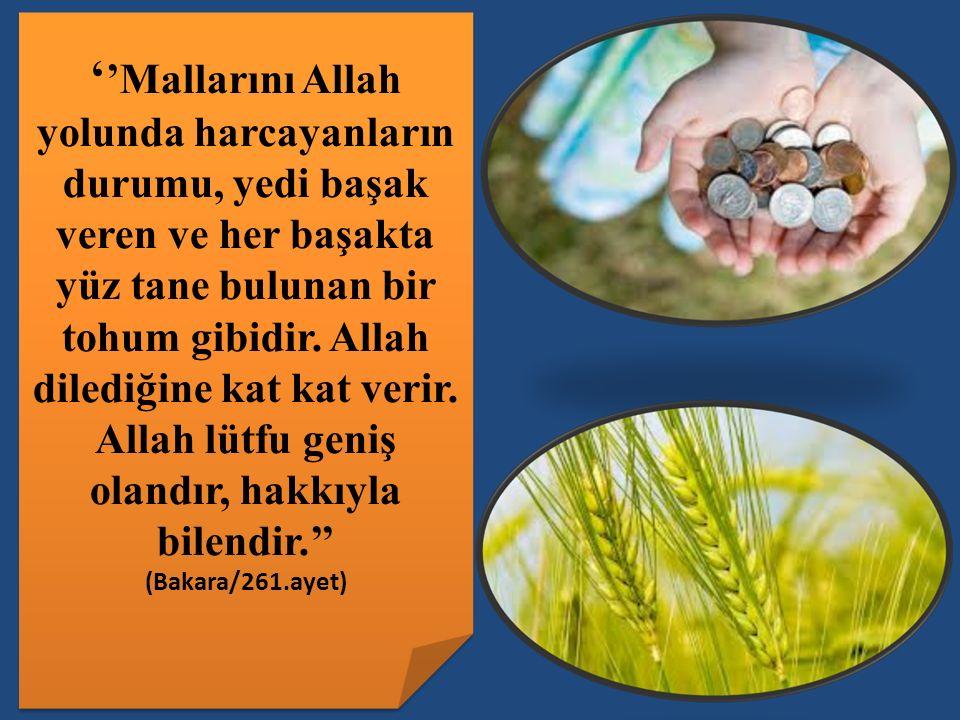 ' 'Mallarını Allah yolunda harcayanların durumu, yedi başak veren ve her başakta yüz tane bulunan bir tohum gibidir.