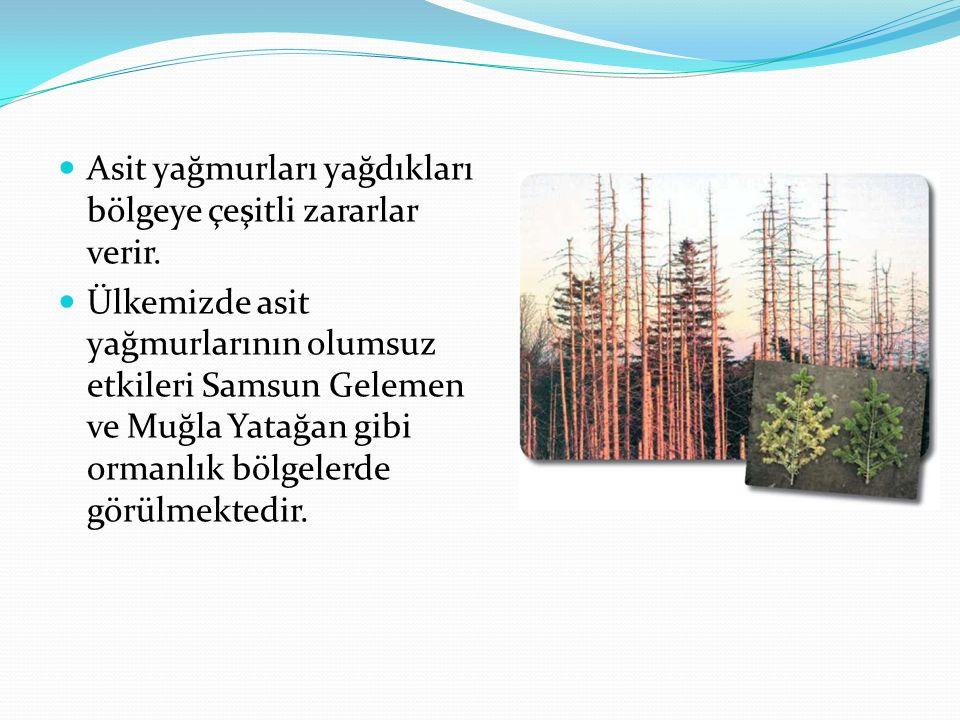 Asit yağmurları yağdıkları bölgeye çeşitli zararlar verir. Ülkemizde asit yağmurlarının olumsuz etkileri Samsun Gelemen ve Muğla Yatağan gibi ormanlık