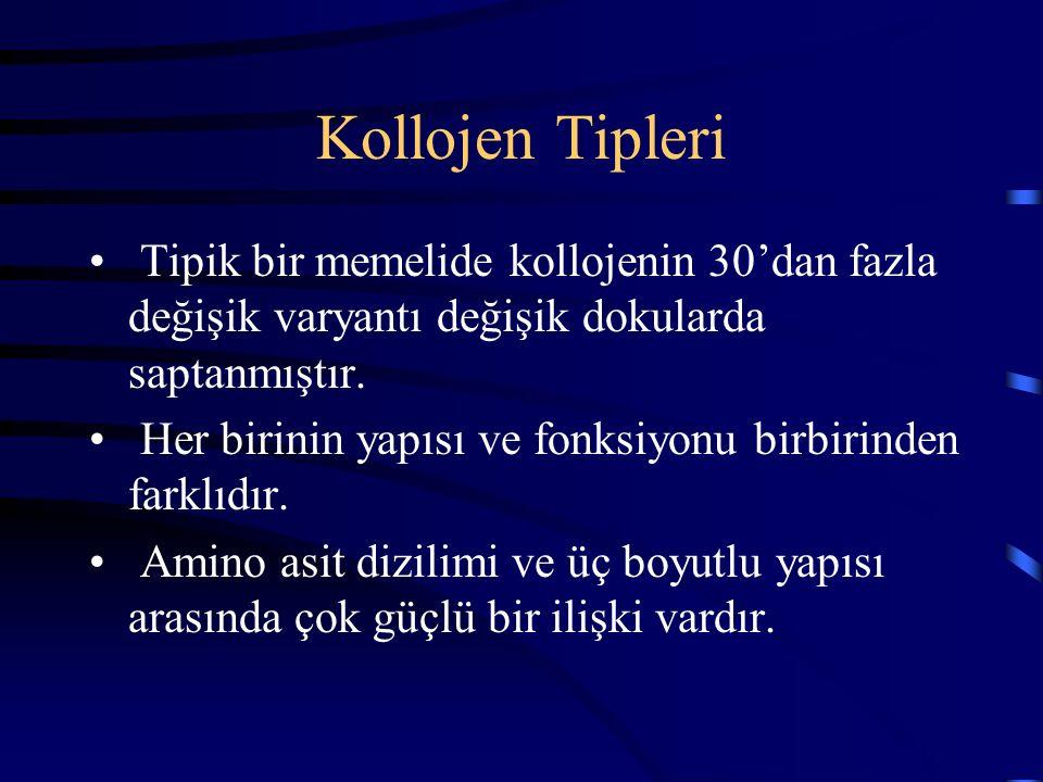 Kollojen Tipleri Tipik bir memelide kollojenin 30'dan fazla değişik varyantı değişik dokularda saptanmıştır. Her birinin yapısı ve fonksiyonu birbirin