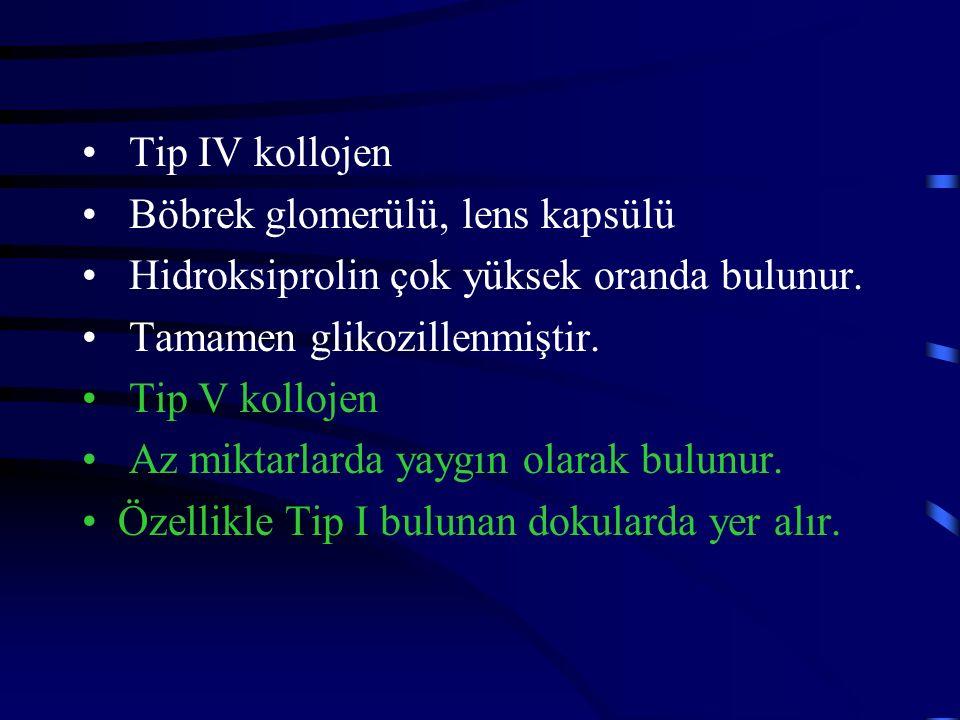 Tip IV kollojen Böbrek glomerülü, lens kapsülü Hidroksiprolin çok yüksek oranda bulunur. Tamamen glikozillenmiştir. Tip V kollojen Az miktarlarda yayg