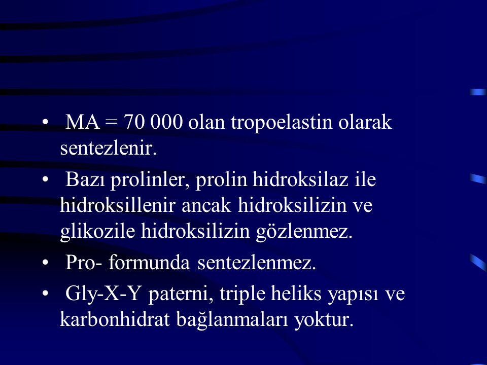 MA = 70 000 olan tropoelastin olarak sentezlenir. Bazı prolinler, prolin hidroksilaz ile hidroksillenir ancak hidroksilizin ve glikozile hidroksilizin
