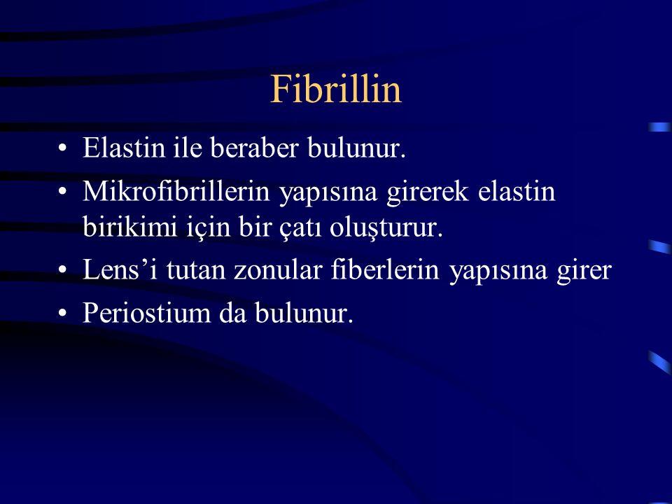 Fibrillin Elastin ile beraber bulunur. Mikrofibrillerin yapısına girerek elastin birikimi için bir çatı oluşturur. Lens'i tutan zonular fiberlerin yap