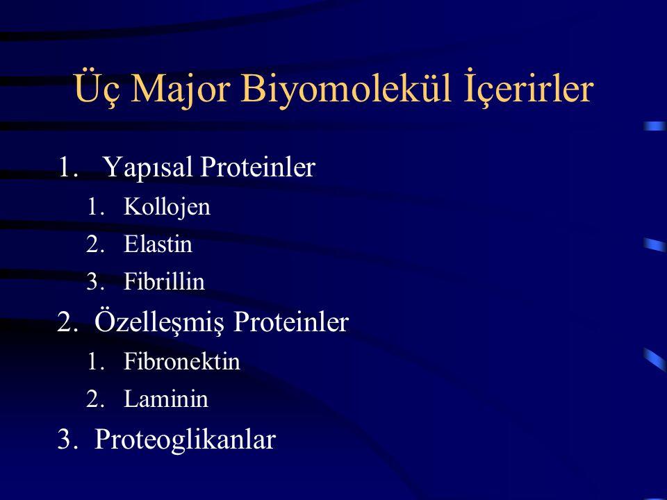 Üç Major Biyomolekül İçerirler 1. Yapısal Proteinler 1.Kollojen 2.Elastin 3.Fibrillin 2.Özelleşmiş Proteinler 1.Fibronektin 2.Laminin 3.Proteoglikanla