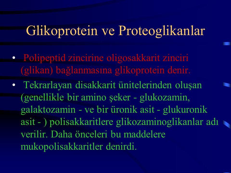 Glikoprotein ve Proteoglikanlar Polipeptid zincirine oligosakkarit zinciri (glikan) bağlanmasına glikoprotein denir. Tekrarlayan disakkarit ünitelerin