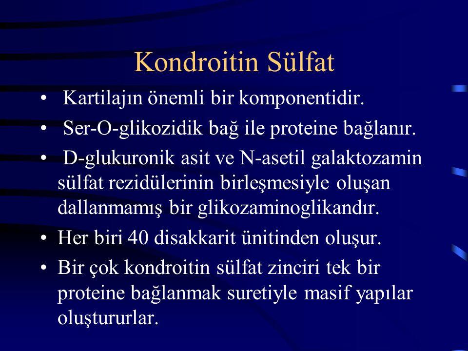 Kondroitin Sülfat Kartilajın önemli bir komponentidir. Ser-O-glikozidik bağ ile proteine bağlanır. D-glukuronik asit ve N-asetil galaktozamin sülfat r