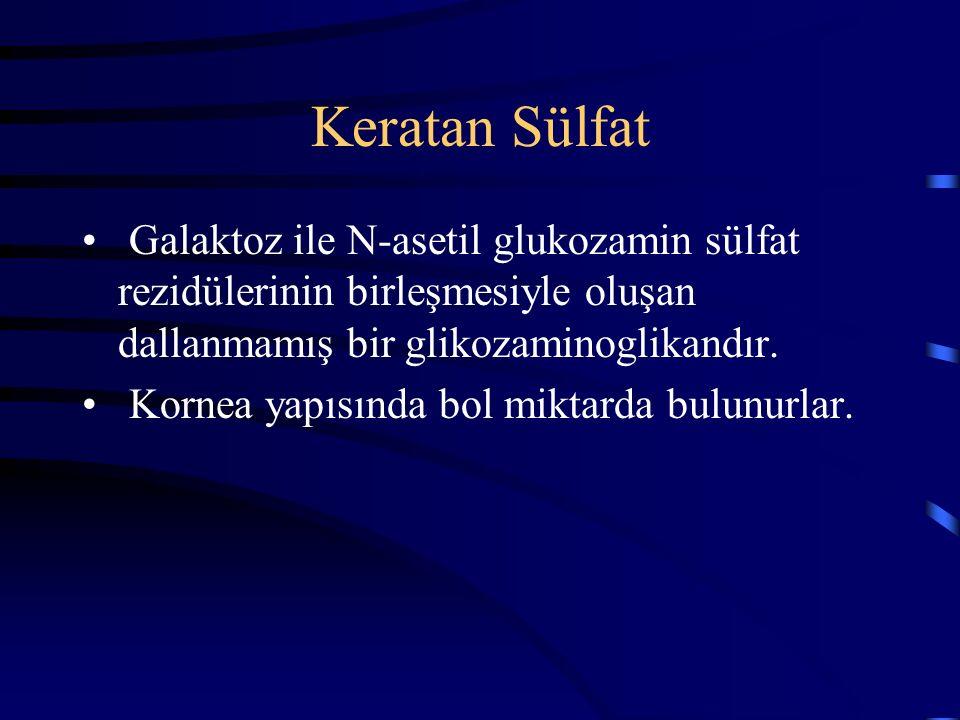 Keratan Sülfat Galaktoz ile N-asetil glukozamin sülfat rezidülerinin birleşmesiyle oluşan dallanmamış bir glikozaminoglikandır. Kornea yapısında bol m