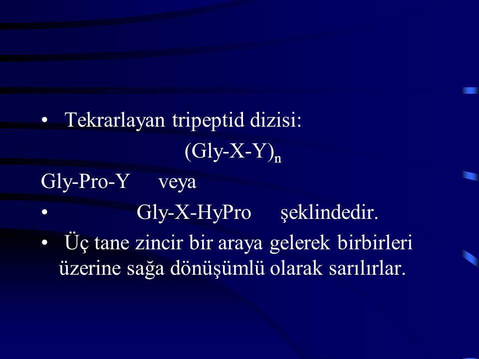 Tekrarlayan tripeptid dizisi: (Gly-X-Y) n Gly-Pro-Y veya Gly-X-HyProşeklindedir. Üç tane zincir bir araya gelerek birbirleri üzerine sağa dönüşümlü ol