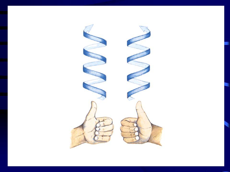 Amino terminal uçtaki sisteinler sadece zincir içi disülfit köprüleri oluştururken, karboksi terminal uçta hem zincir içi hem de zincirler arası disülfit köprüleri oluşur.