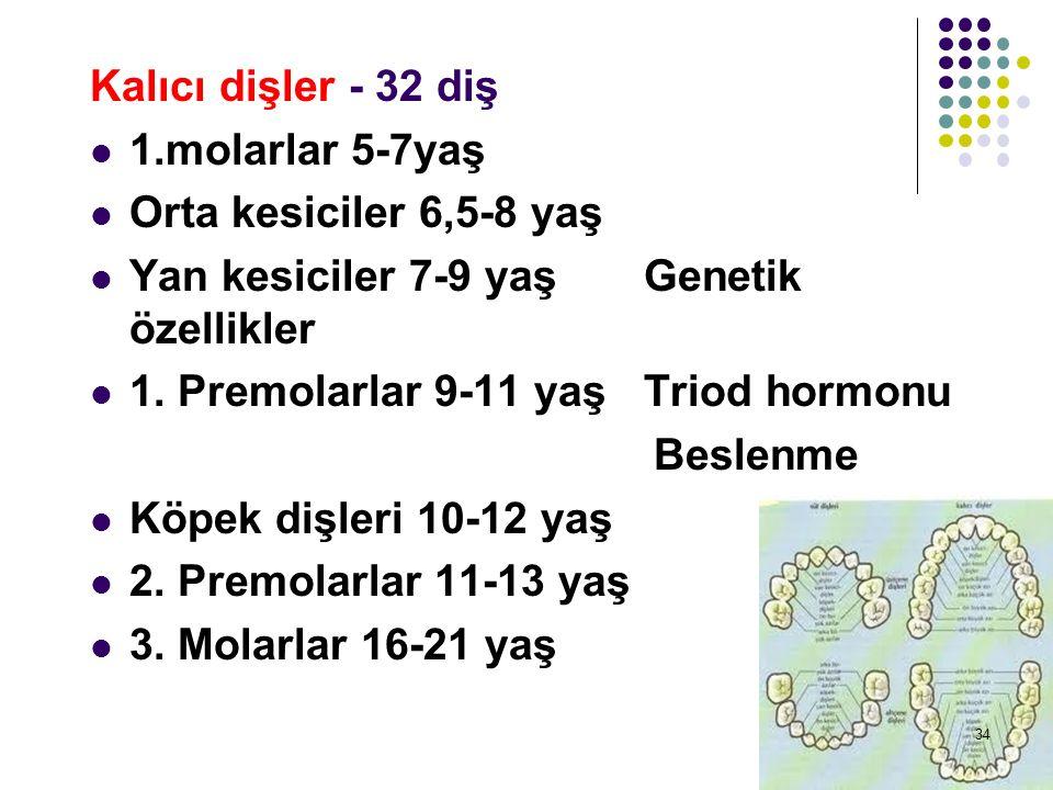 Kalıcı dişler - 32 diş 1.molarlar 5-7yaş Orta kesiciler 6,5-8 yaş Yan kesiciler 7-9 yaş Genetik özellikler 1. Premolarlar 9-11 yaş Triod hormonu Besle