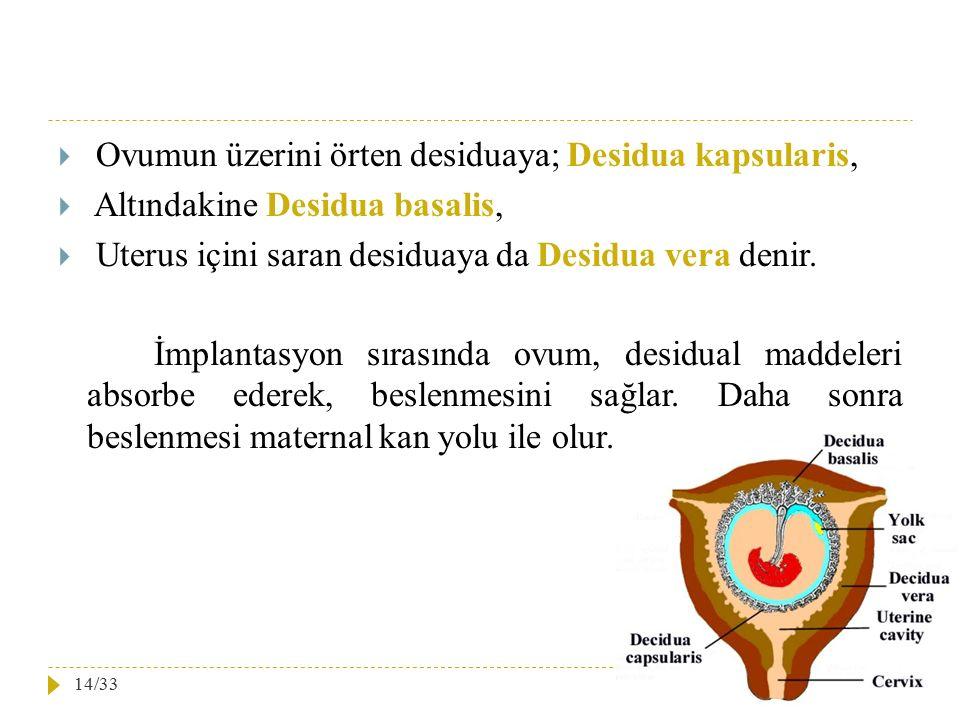  Ovumun üzerini örten desiduaya; Desidua kapsularis,  Altındakine Desidua basalis,  Uterus içini saran desiduaya da Desidua vera denir. İmplantasyo