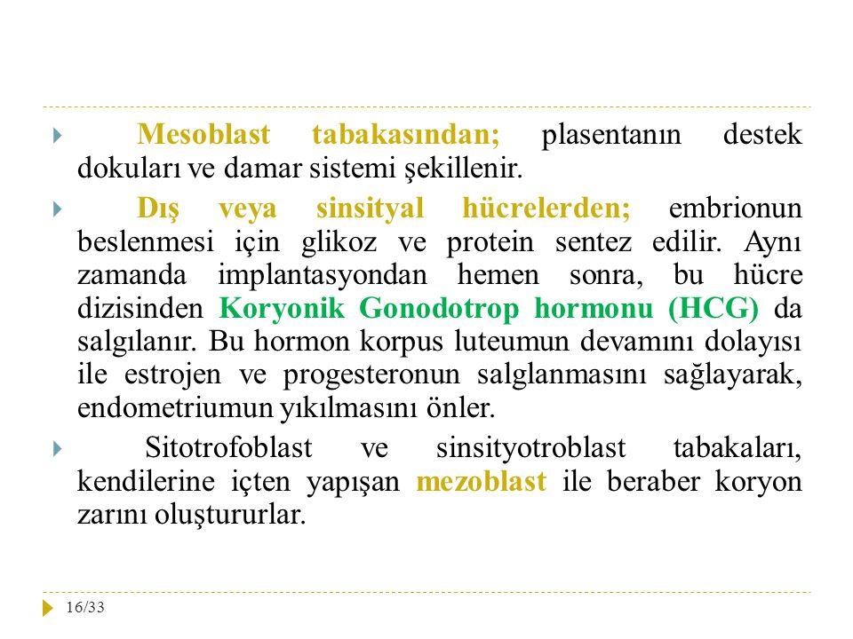  Mesoblast tabakasından; plasentanın destek dokuları ve damar sistemi şekillenir.  Dış veya sinsityal hücrelerden; embrionun beslenmesi için glikoz
