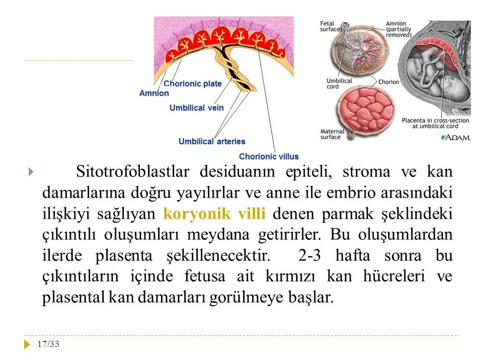  Sitotrofoblastlar desiduanın epiteli, stroma ve kan damarlarına doğru yayılırlar ve anne ile embrio arasındaki ilişkiyi sağlıyan koryonik villi dene
