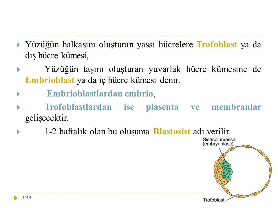  Yüzüğün halkasını oluşturan yassı hücrelere Trofoblast ya da dış hücre kümesi,  Yüzüğün taşını oluşturan yuvarlak hücre kümesine de Embrioblast ya
