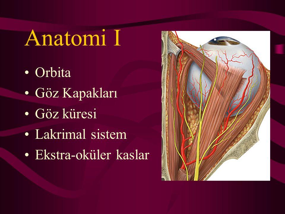 Anatomi II Göz Küresi –7.5 gr –6.5 cc –4 rektus ve 2 oblik adale –Optik sinir –6/12 kafa çifti (2, 3, 4, 5, 6, 7.