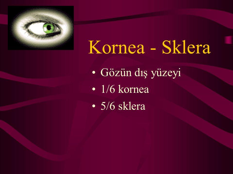 Vitreus Şeffaf Jelatinöz Avasküler 4.5ml Gözün 2/3'ü Hyalüronik asit matrikste asılı kollajen
