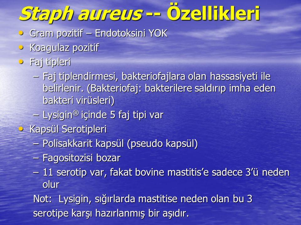 Staph aureus -- Özellikleri Gram pozitif – Endotoksini YOK Gram pozitif – Endotoksini YOK Koagulaz pozitif Koagulaz pozitif Faj tipleri Faj tipleri –Faj tiplendirmesi, bakteriofajlara olan hassasiyeti ile belirlenir.