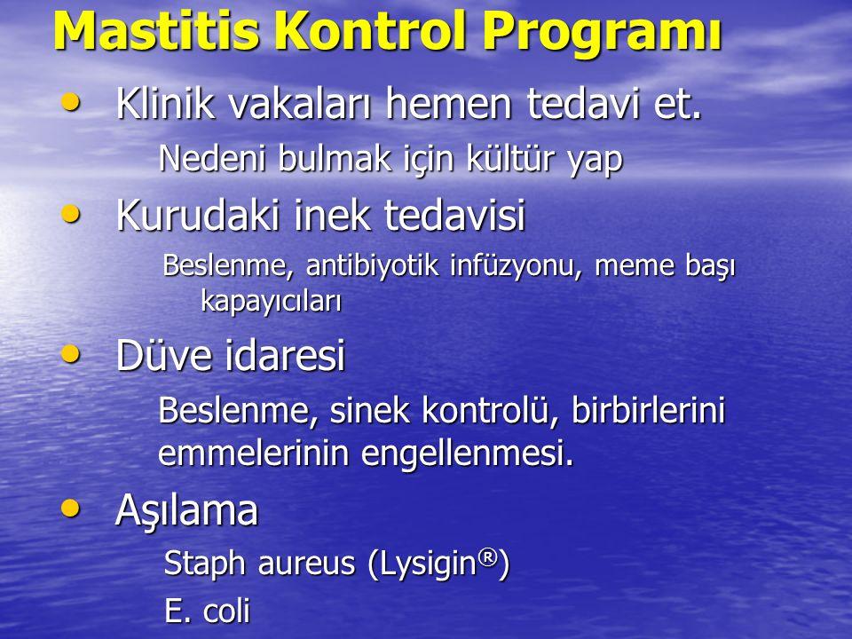 Mastitis Kontrol Programı Klinik vakaları hemen tedavi et.