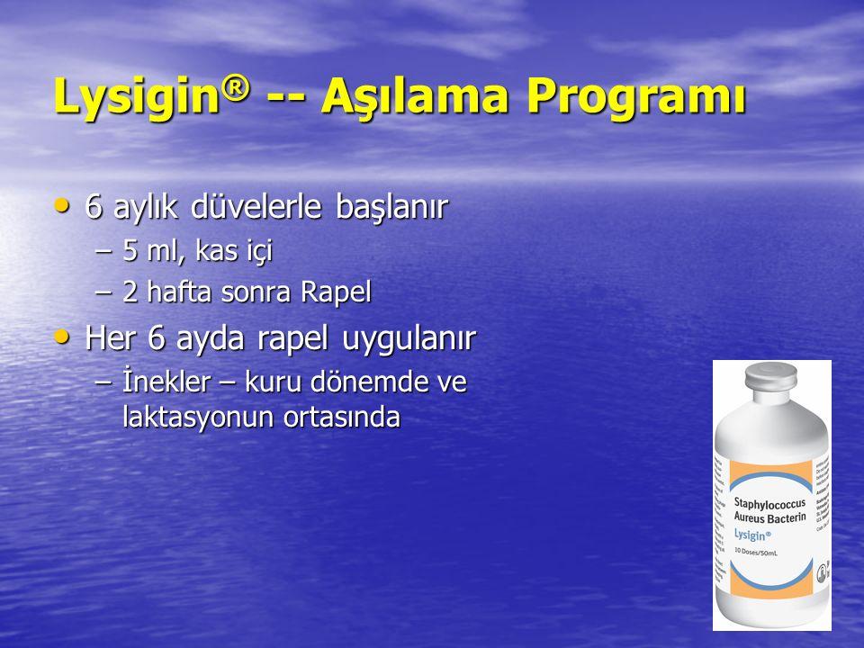 Lysigin ® -- Aşılama Programı 6 aylık düvelerle başlanır 6 aylık düvelerle başlanır –5 ml, kas içi –2 hafta sonra Rapel Her 6 ayda rapel uygulanır Her 6 ayda rapel uygulanır –İnekler – kuru dönemde ve laktasyonun ortasında