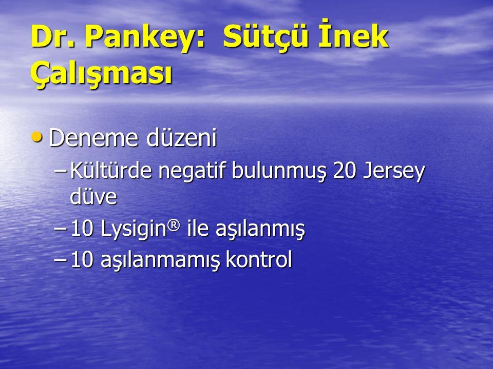 Dr. Pankey: Sütçü İnek Çalışması Deneme düzeni Deneme düzeni –Kültürde negatif bulunmuş 20 Jersey düve –10 Lysigin ® ile aşılanmış –10 aşılanmamış kon