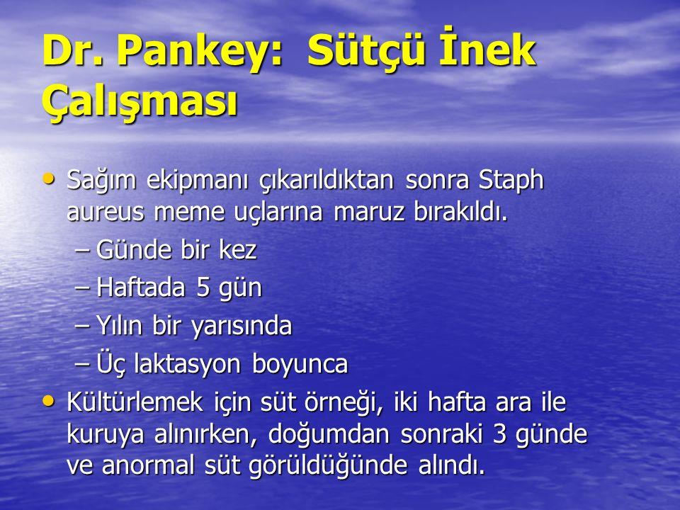 Dr. Pankey: Sütçü İnek Çalışması Sağım ekipmanı çıkarıldıktan sonra Staph aureus meme uçlarına maruz bırakıldı. Sağım ekipmanı çıkarıldıktan sonra Sta