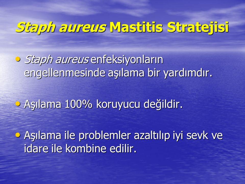 Staph aureus Mastitis Stratejisi Staph aureus enfeksiyonların engellenmesinde aşılama bir yardımdır.