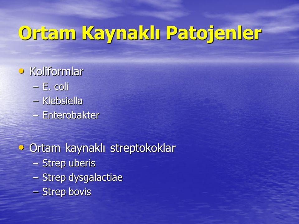 Ortam Kaynaklı Patojenler Primer kaynak = ineğin ortamı Primer kaynak = ineğin ortamı –Dışkı, altlık, yem, çamur, su Islak koşullar, ılık havalar, yüksek nem Islak koşullar, ılık havalar, yüksek nem Risk dönemleri Risk dönemleri –Kuru dönemin başı, kuru dönemin sonu ve laktasyonun başı