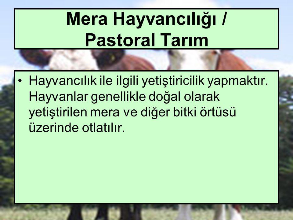 Mera Hayvancılığı / Pastoral Tarım Hayvancılık ile ilgili yetiştiricilik yapmaktır. Hayvanlar genellikle doğal olarak yetiştirilen mera ve diğer bitki
