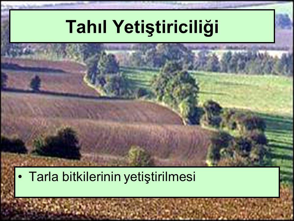 Ticari Tarım İşletmeciliği SaPazara yönelik yapılan üretim sistemidir.