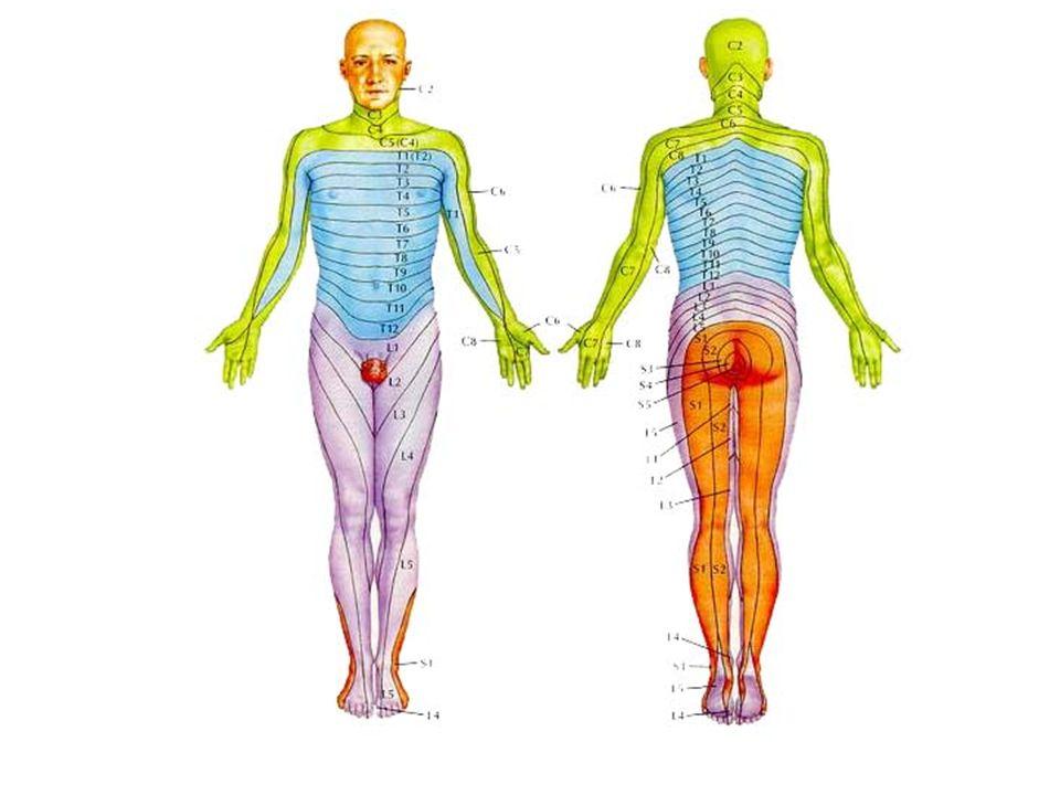 Özgül Testler Düz bacak kaldırma Çapraz düz bacak kaldırma testi Laseque testi Valsalva Manerası Femoral GermeTesti L5-S1 L3-L4