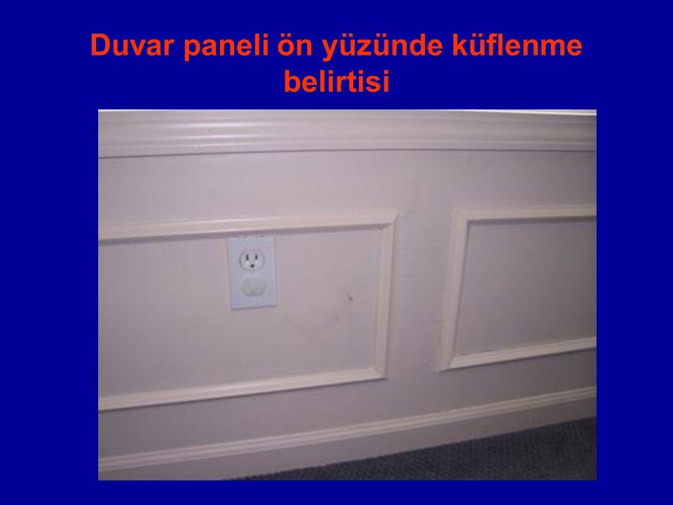 Duvar paneli ön yüzünde küflenme belirtisi
