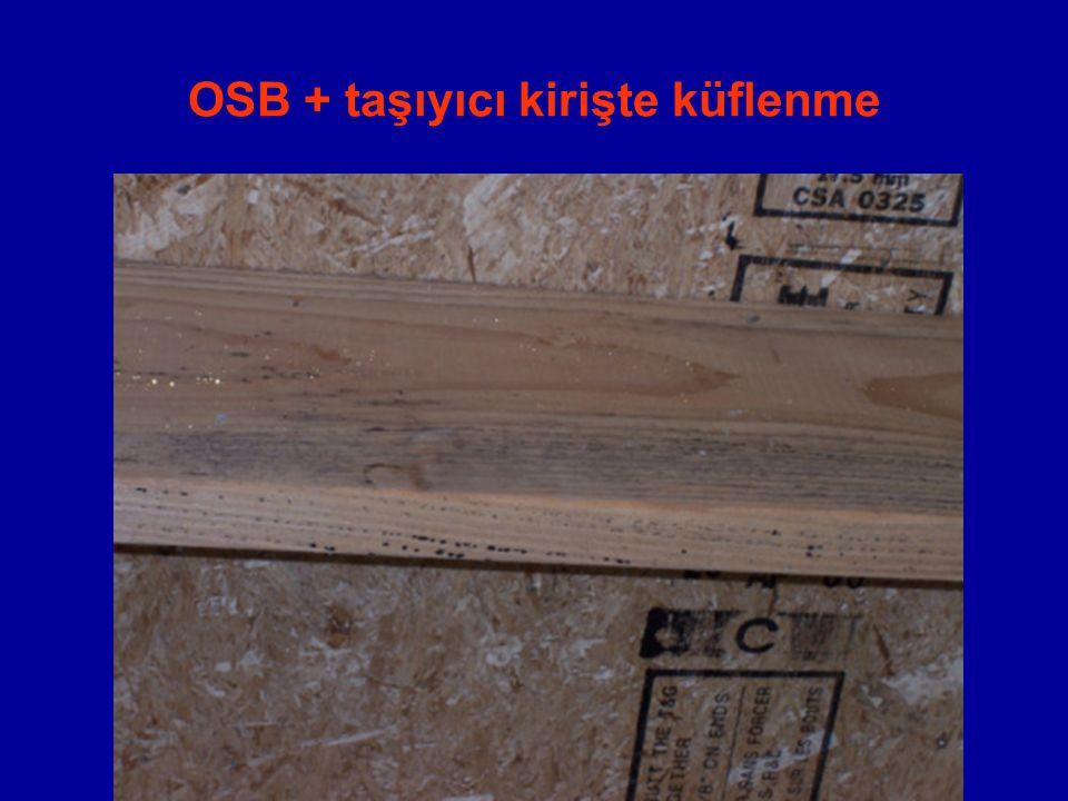 OSB + taşıyıcı kirişte küflenme