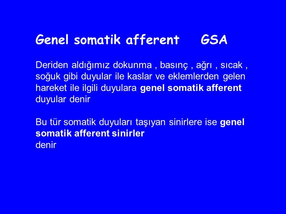 Genel somatik afferent GSA Deriden aldığımız dokunma, basınç, ağrı, sıcak, soğuk gibi duyular ile kaslar ve eklemlerden gelen hareket ile ilgili duyulara genel somatik afferent duyular denir Bu tür somatik duyuları taşıyan sinirlere ise genel somatik afferent sinirler denir