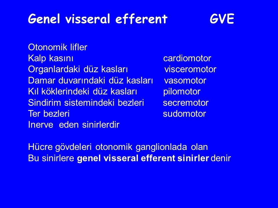 Genel visseral efferent GVE Otonomik lifler Kalp kasını cardiomotor Organlardaki düz kasları visceromotor Damar duvarındaki düz kasları vasomotor Kıl