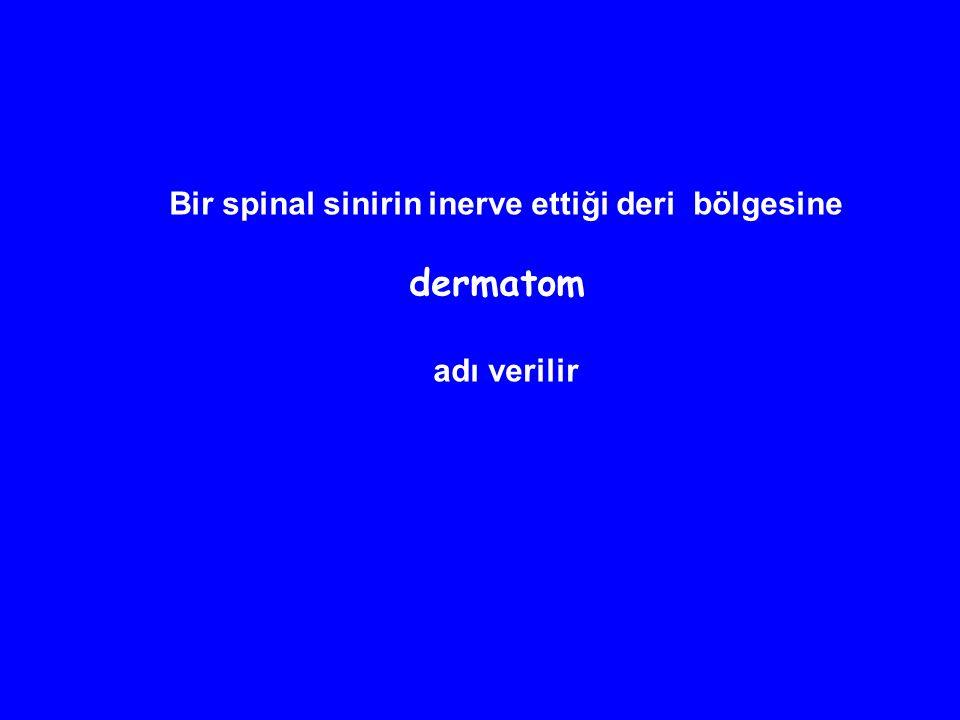 Bir spinal sinirin inerve ettiği deri bölgesine dermatom adı verilir
