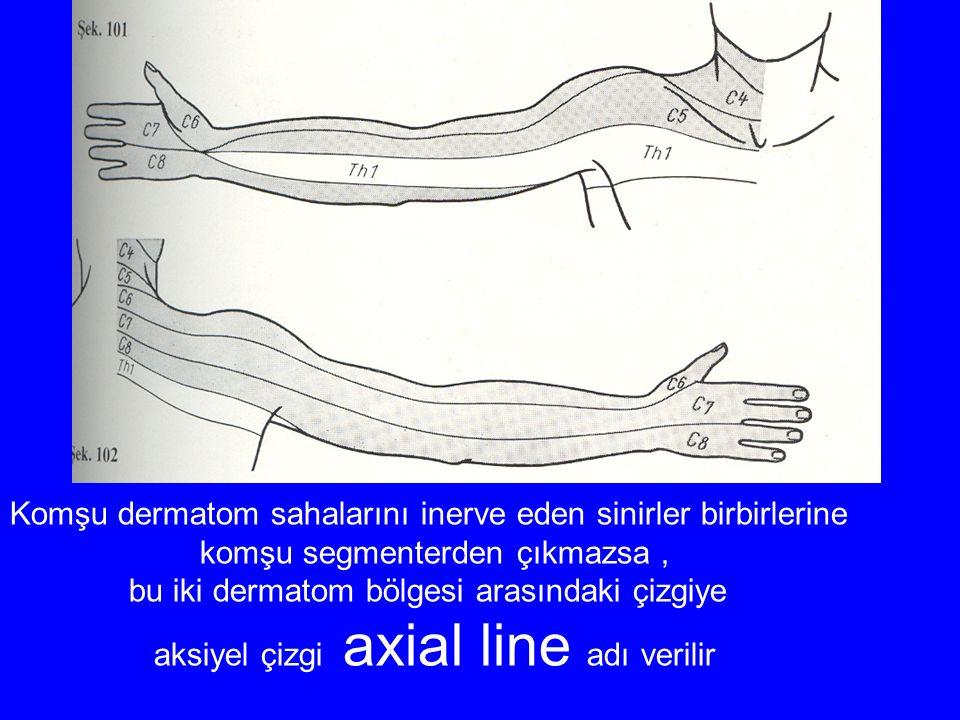 Komşu dermatom sahalarını inerve eden sinirler birbirlerine komşu segmenterden çıkmazsa, bu iki dermatom bölgesi arasındaki çizgiye aksiyel çizgi axial line adı verilir