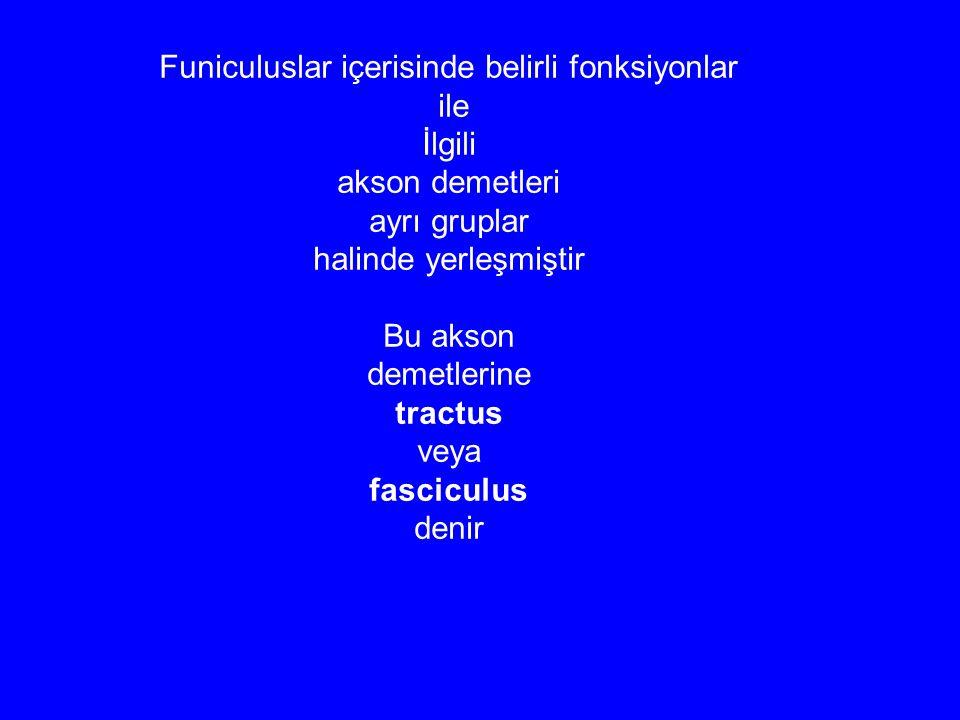 Funiculuslar içerisinde belirli fonksiyonlar ile İlgili akson demetleri ayrı gruplar halinde yerleşmiştir Bu akson demetlerine tractus veya fasciculus denir