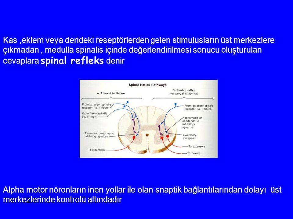 Kas,eklem veya derideki reseptörlerden gelen stimulusların üst merkezlere çıkmadan, medulla spinalis içinde değerlendirilmesi sonucu oluşturulan cevaplara spinal refleks denir Alpha motor nöronların inen yollar ile olan snaptik bağlantılarından dolayı üst merkezlerinde kontrolü altındadır