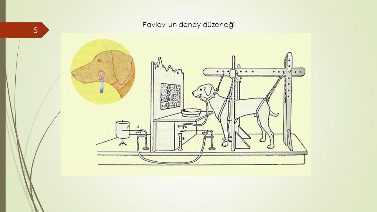 5 Pavlov'un deney düzeneği