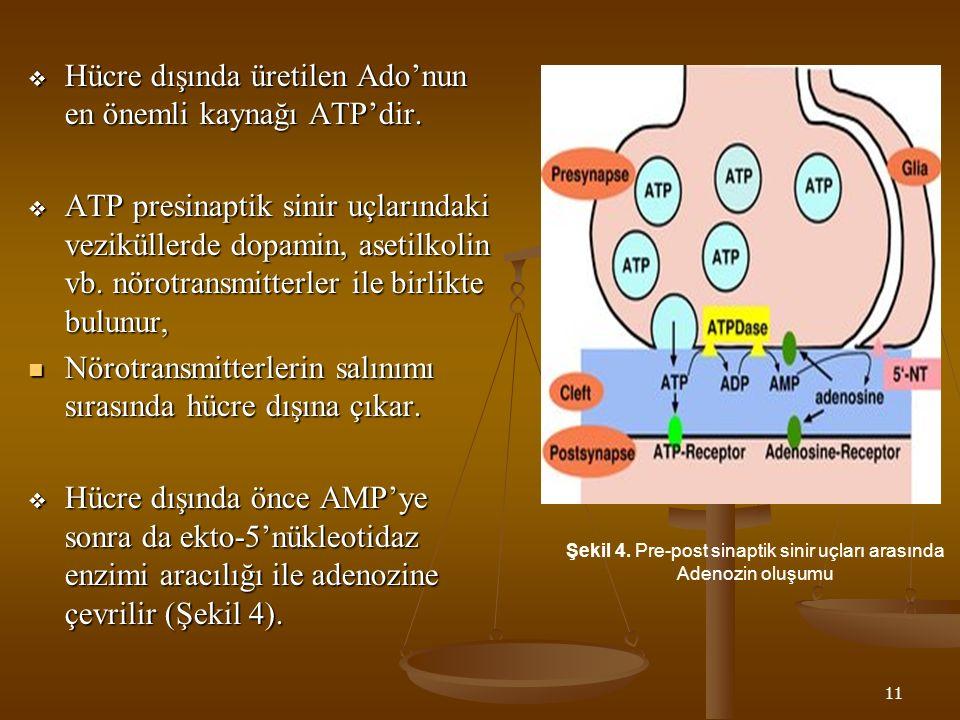 11  Hücre dışında üretilen Ado'nun en önemli kaynağı ATP'dir.  ATP presinaptik sinir uçlarındaki veziküllerde dopamin, asetilkolin vb. nörotransmitt