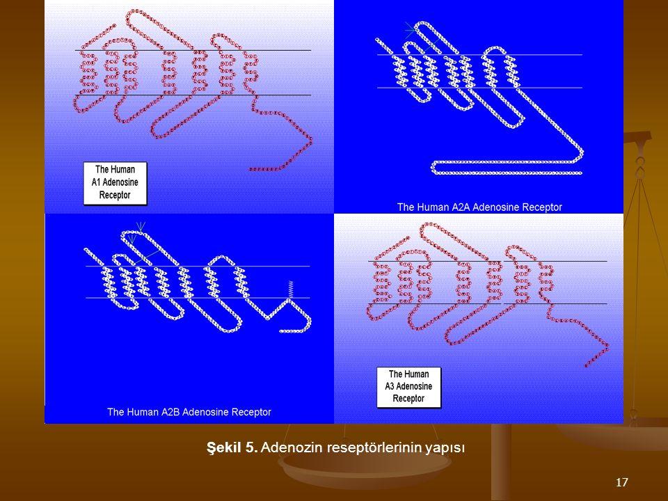 17 Şekil 5. Adenozin reseptörlerinin yapısı