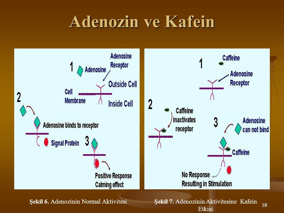 18 Adenozin ve Kafein Şekil 6. Adenozinin Normal AktivitesiŞekil 7. Adenozinin Aktivitesine Kafein Etkisi
